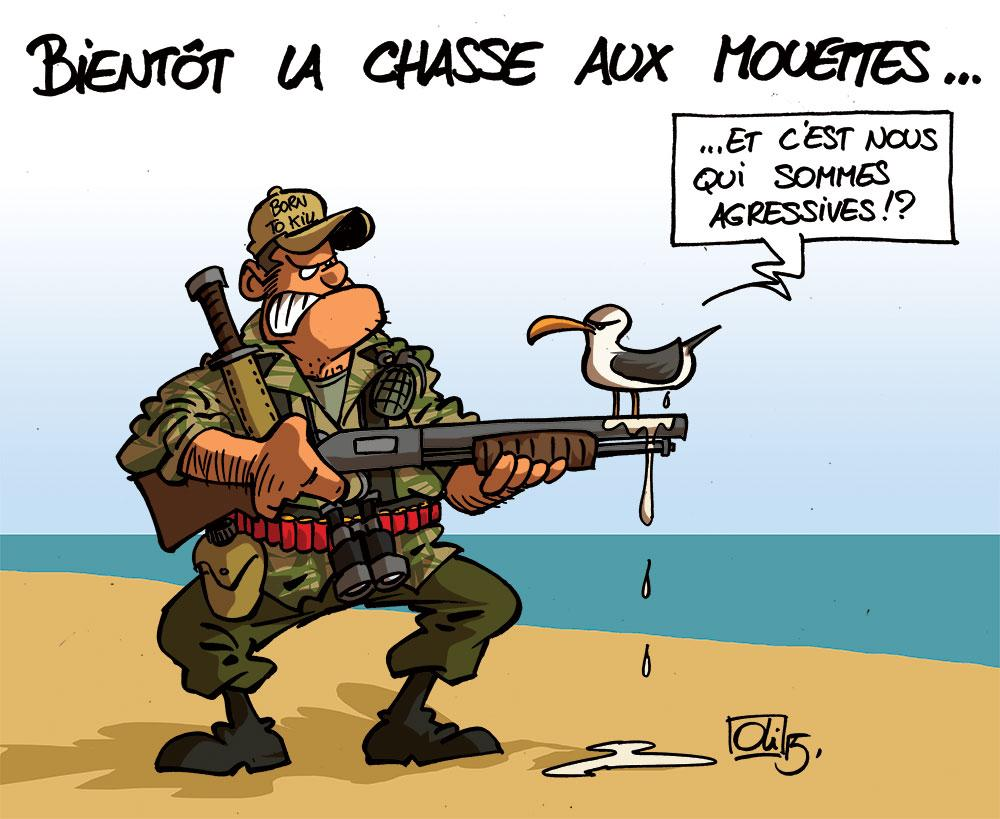 Mouettes-chasse-agressive