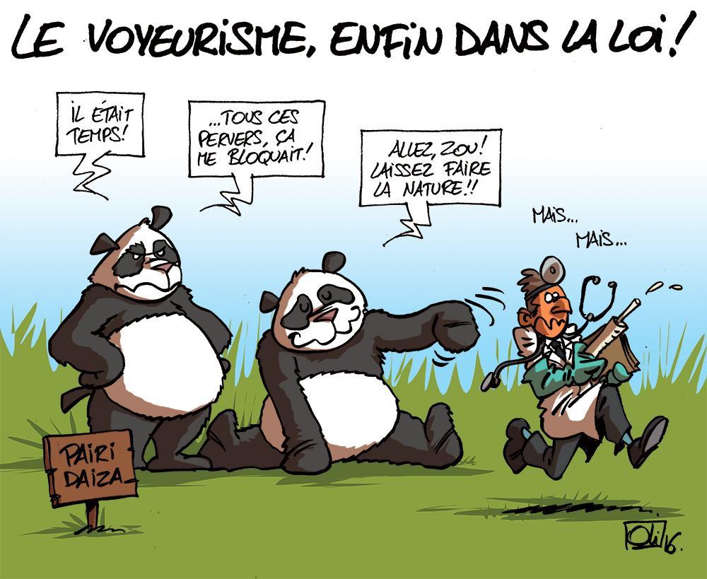 Voyeurisme-pandas-pairi-daiza-loi-belgique