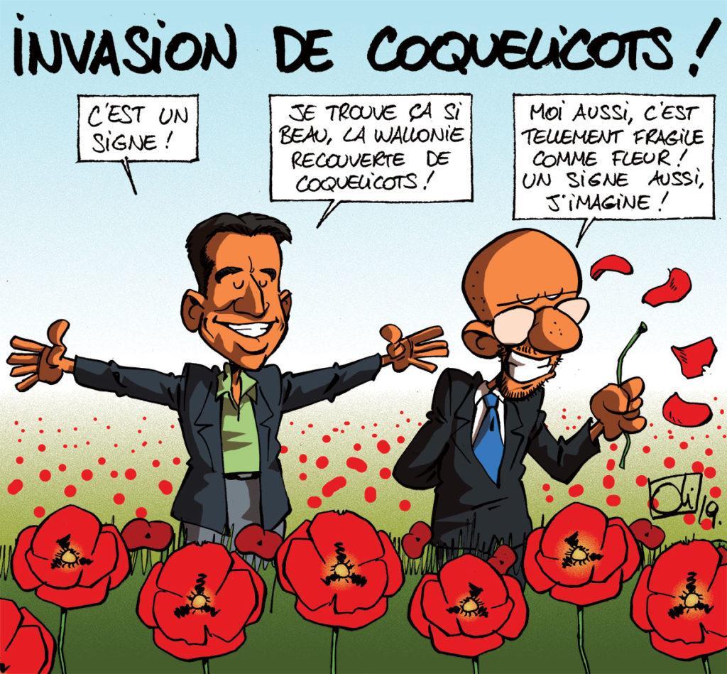 Invasion de coquelicots !