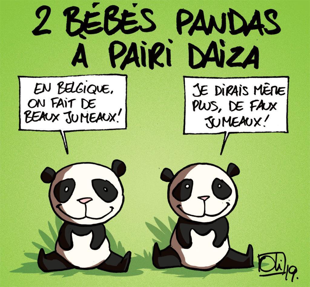 2 nouveaux bébés pandas sont nés à Pairi Daiza !